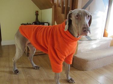Fleece Dog Jumper - Orange - BUY ONE GET ONE HALF PRICE 4 - £19.99