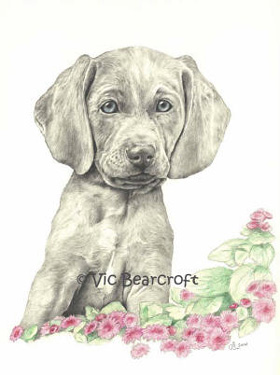 Weimaraner Puppy by Vic Bearcroft Single card 2 - £1.40