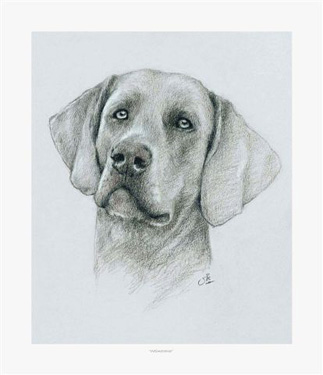 Card Sketch by Vic Bearcroft 1 - £1.40