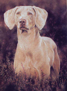 A Ghost of A Dog - Greetings card Single 2 - £1.70