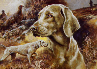 The Weimaraner by Mick Cawston Single Card 1 - £1.70