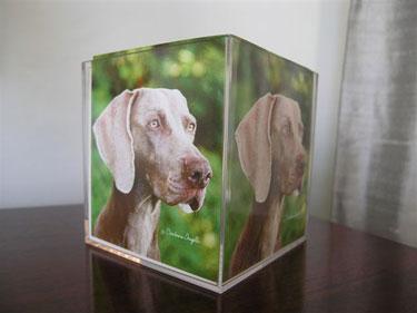 Weimaraner Stationary Cube  3 - £7.50
