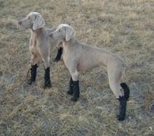 Dogwear All Weather Boot - SINGLE 4 - £20.00