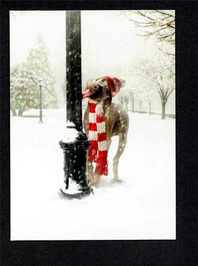 WEIMARANER IN SCARF & CAP TONGUE STUCK TO POLE AVANTI CHRISTMAS CARDS 1 - £7.50