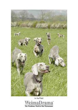 In the Field  by Neil Barnden 3 - £12.00