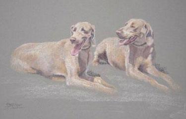 Original Weimaraners Resting by Lorna Dredger 2 - £125.00