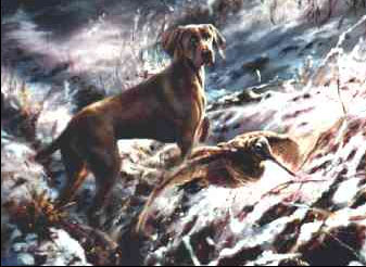 Weimaraner in the Snow by Mick Cawston 5 - £98.00