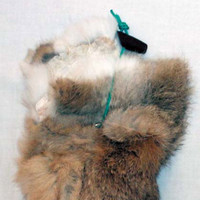 1LB Sporting Saint Rabbit Dummy with throwing toggle 3 - £9.86